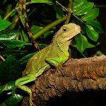Terrarios y jaulas para reptiles